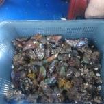 Boardwalk Mussels