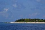 Apo Island Close-up