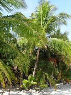 Feeling Tropical