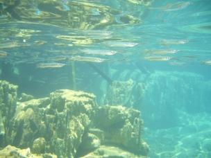 Fish in Kayangan Lake