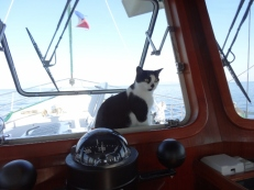 Kitty on Watch