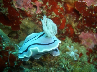 Nudibranch 2