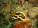 Nudibranch 3
