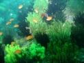 Undersea Garden by Joan