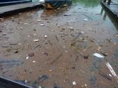 Aftermath at the Marina