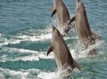 Ocean Adventure Dolphin Walk