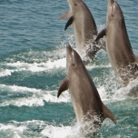 Ocean Adventure Dolphin Walk