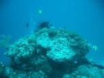 Diboyoyan Island Reef Scene