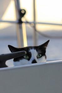 Nauticat (by Tara)