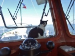 Cruising Cat