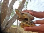 Land Turtles