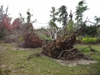 More Yolanda Damage
