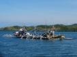 Two Tuna Boats