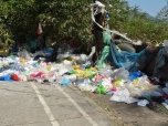 Plastic Bags Make Their Escape