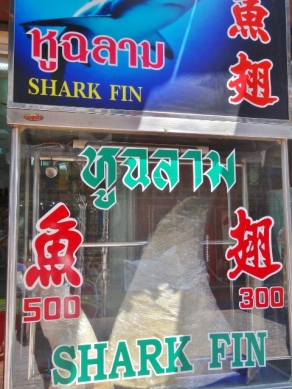 Shark Fins Everywhere