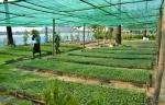 Waterfront Veggie Garden
