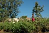 Cow Herding (Inle Lake, 2005)