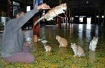 Jumping Cat Monastery (Inle Lake, 2005)