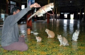 Jumping Cat Monastery (Inle Lake, 2005)