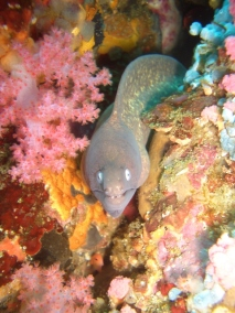Moray Eel 3