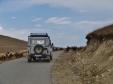 UAZ Sheep Encounter