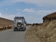 UAZ Sheep Encounter