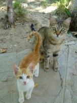 More Kitties