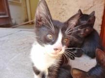 Odd Kitten Out