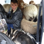 Sheep & Goat Lada 4x4