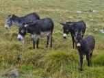 Wet Mules