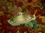 Nudibranch One