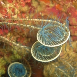 Underwater Spirals