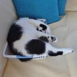 In My Basket