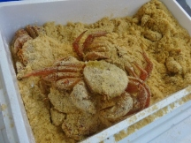 Crabs in Sawdust