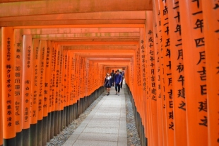 Thousands of Torii Gates