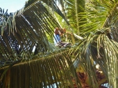 Pruning Fronds
