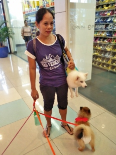 dog-or-purse