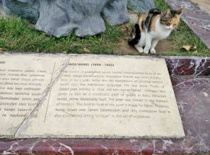 poetry-loving-cat