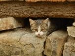shy-kitty