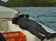 Kay Naps Between Dives