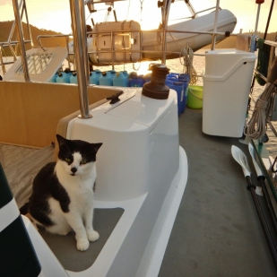All Paws on Deck