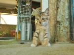 Dive Shop Kitty