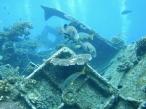 Malayan Wreck 1