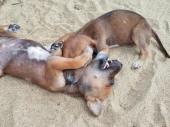 Puppy Wrestling