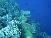 Tubbataha Reef Scene