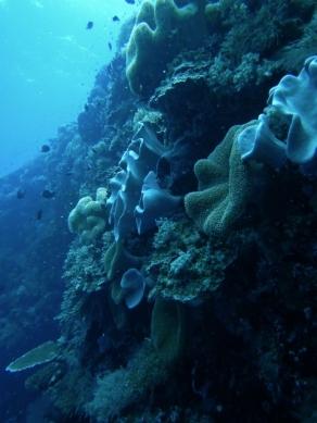Tubbataha Reef