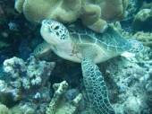 Turtle Poses