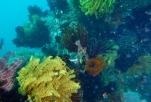 Sabang Point Reef
