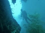 Okikawa Swim Through
