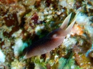 Sea Slug